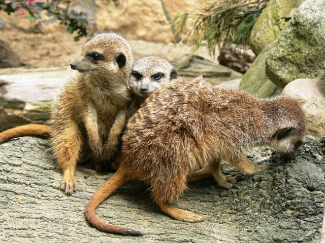 ZOO in Gdansk. Tour for kids in Gdansk, school trips to Poland – Hit The Road Travel