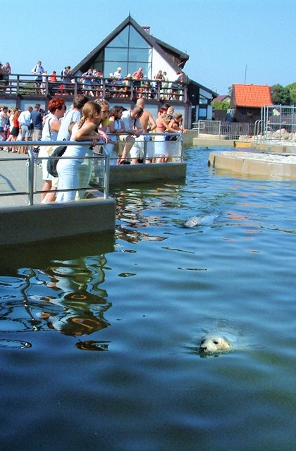 Seal Centre in Hel. Marine Tours of Gdansk, Sopot, Gdynia – Hit The Road Travel