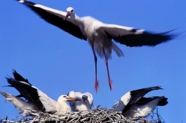 Stork nest. Bike tours – Hit The Road Travel