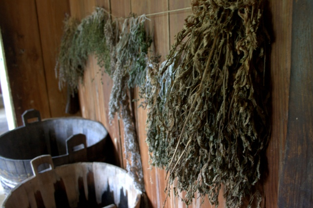 Workshops on herbal medicine. Tours of Poland – Hit The Road Travel