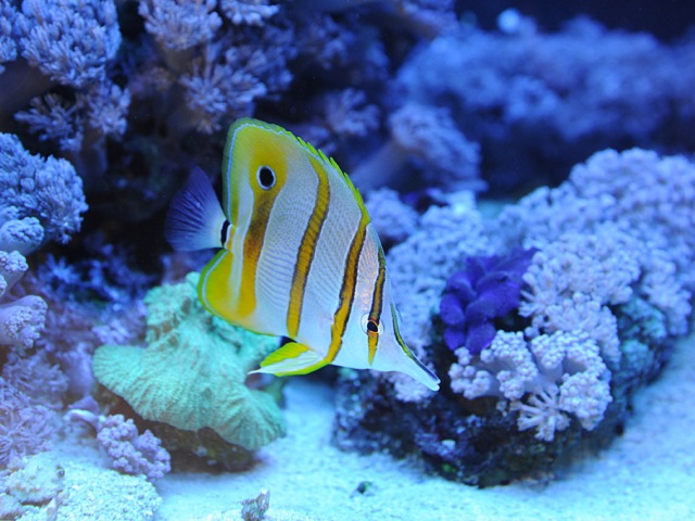 Gdynia Aquarium. Tour for kids in Gdansk, school trips to Poland – Hit The Road Travel