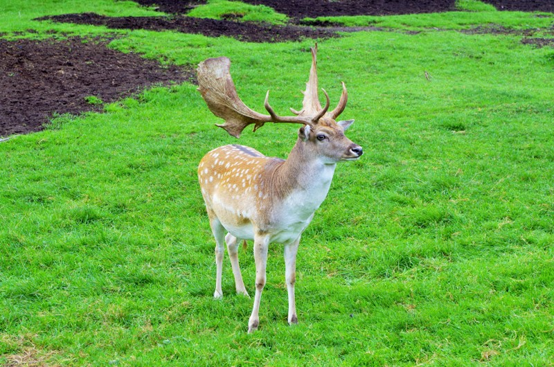 Wildlife Park in Kadzidlowo. Tours of Poland – Hit The Road Travel