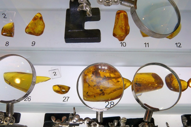Amber Museum in Gdansk. Amber tours – Hit The Road Travel