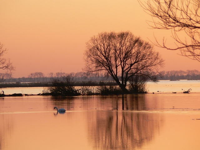 Wintertime in the Warta River Mouth National Park. Birdwatching tours – Hit The Road Travel