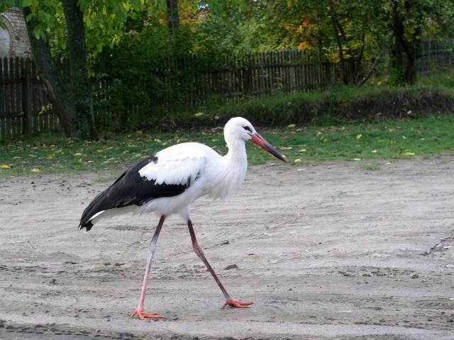 Stork. Folk tour – Hit The Road Travel