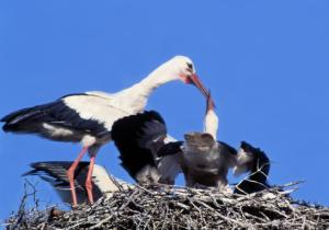 Polish Birds